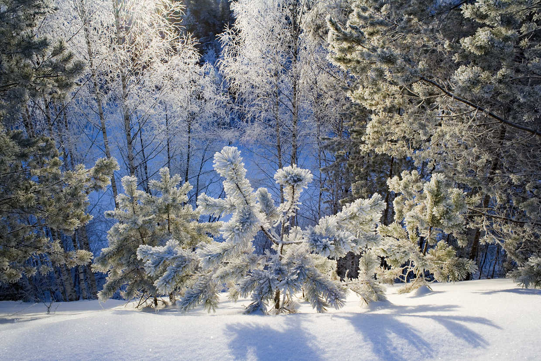 Картинки с анимациями зима, первым днем после